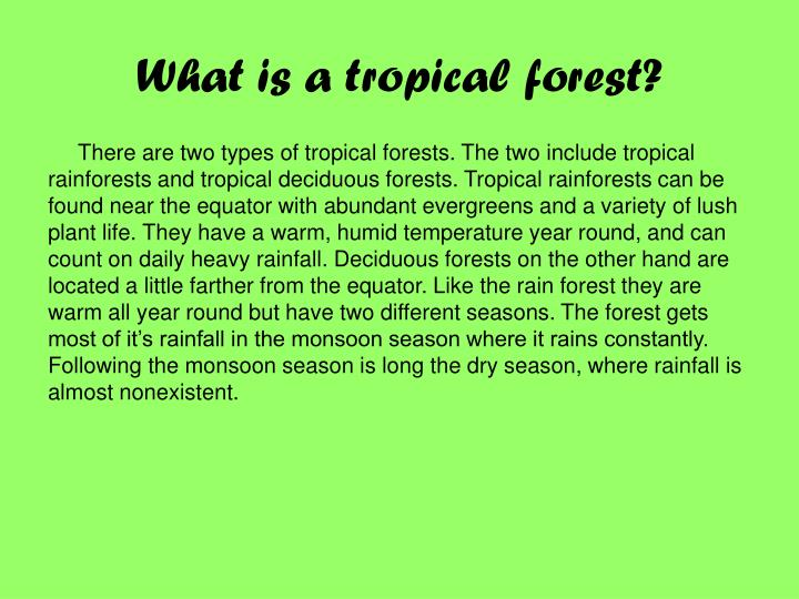 What is a tropical forest?