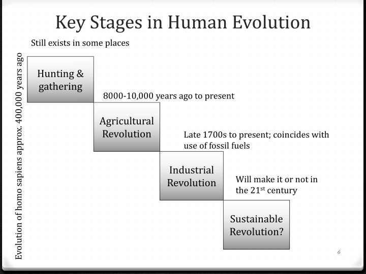 Key Stages in Human Evolution