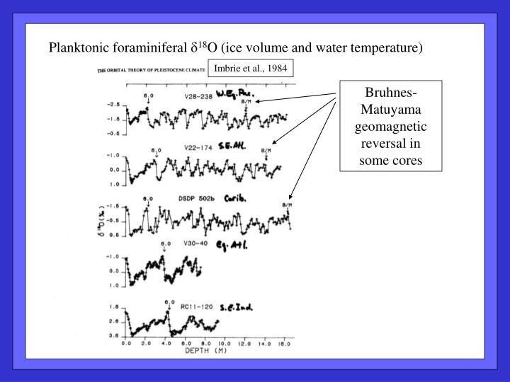 Planktonic foraminiferal