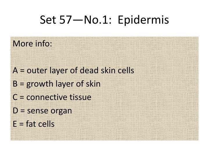 Set 57—No.1:  Epidermis