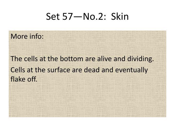 Set 57—No.2:  Skin
