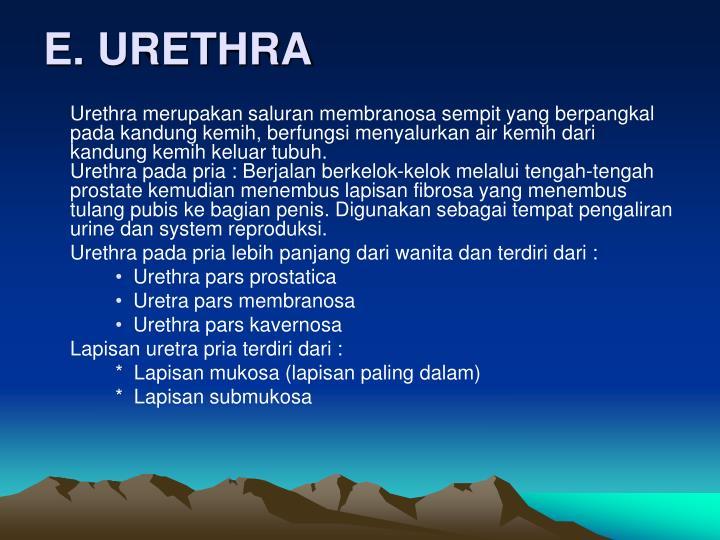 E. URETHRA