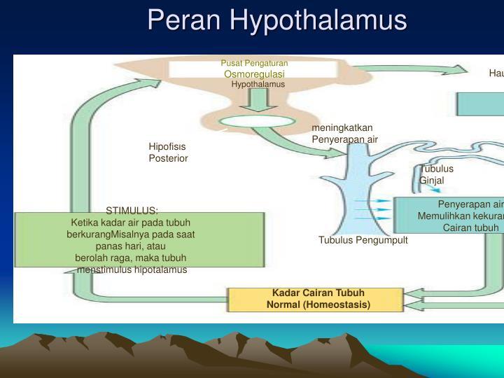 Peran Hypothalamus
