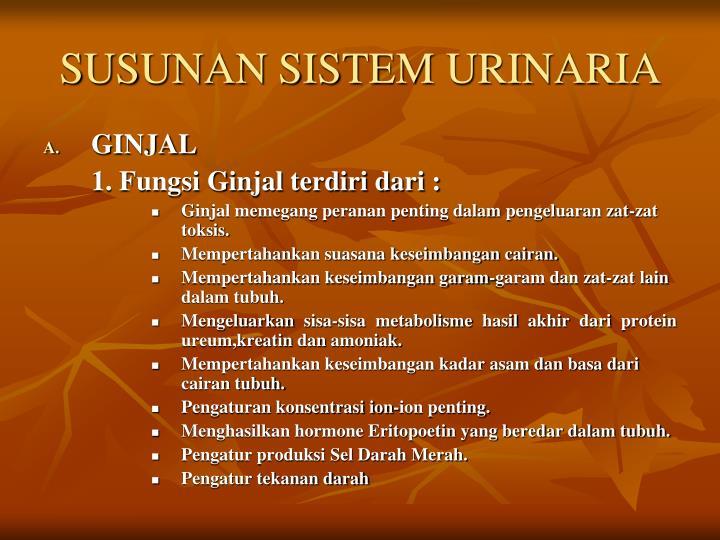 SUSUNAN SISTEM URINARIA