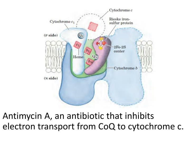 Antimycin