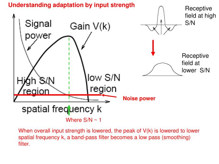 Understanding adaptation by input strength