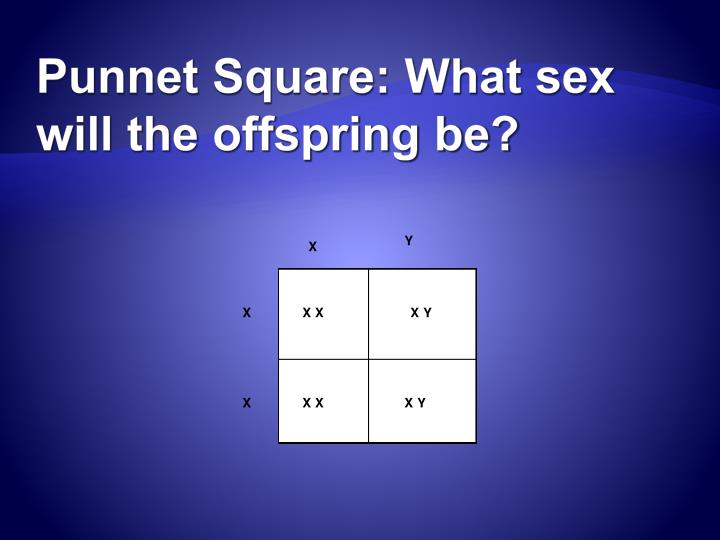 Punnet Square: What sex will the offspring be?