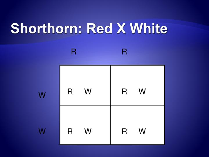 Shorthorn: Red X White