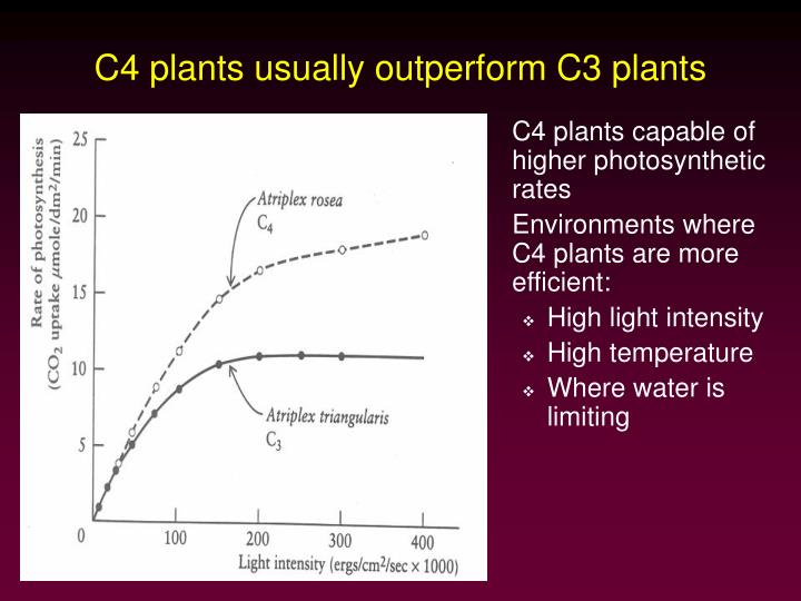 C4 plants usually outperform C3 plants