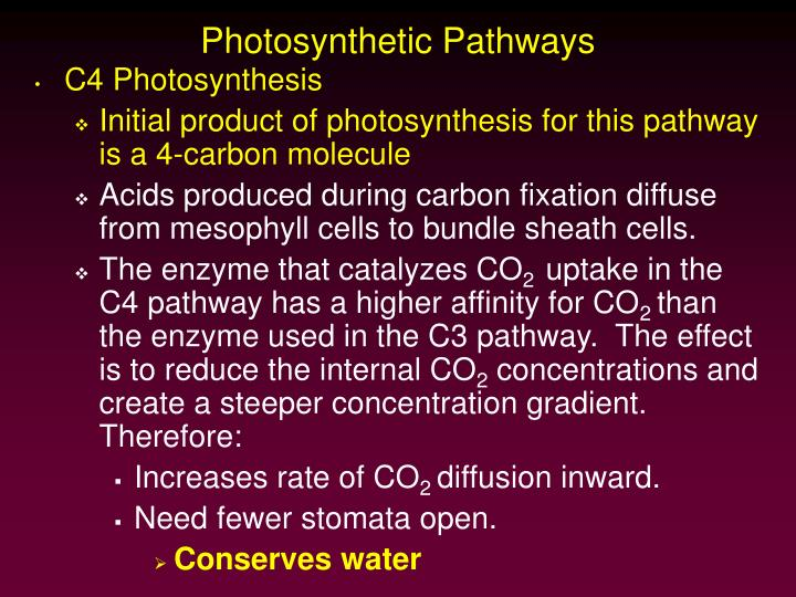 Photosynthetic pathways1
