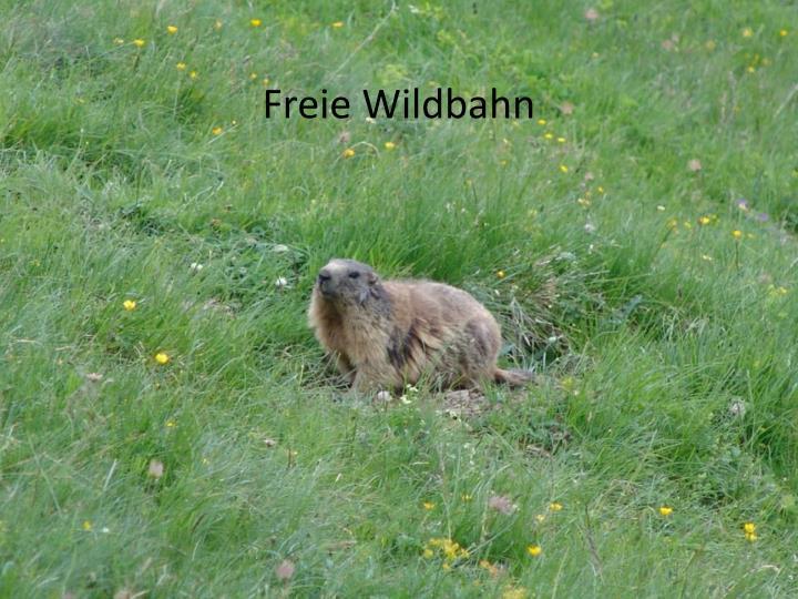 Freie Wildbahn