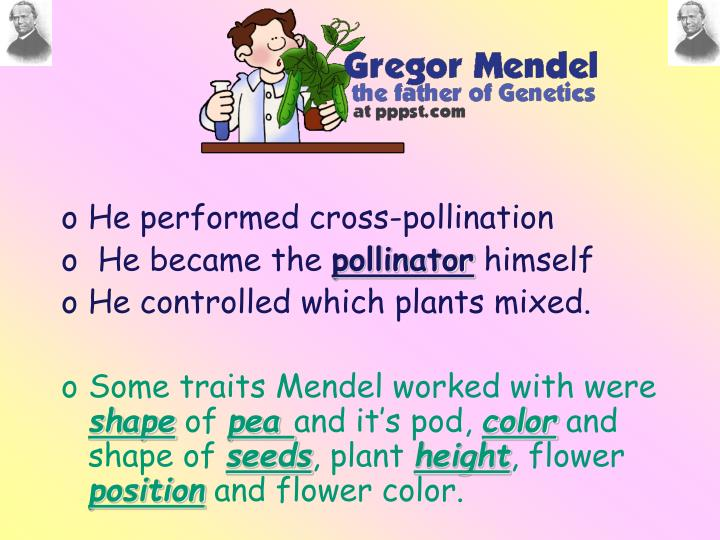 He performed cross-pollination