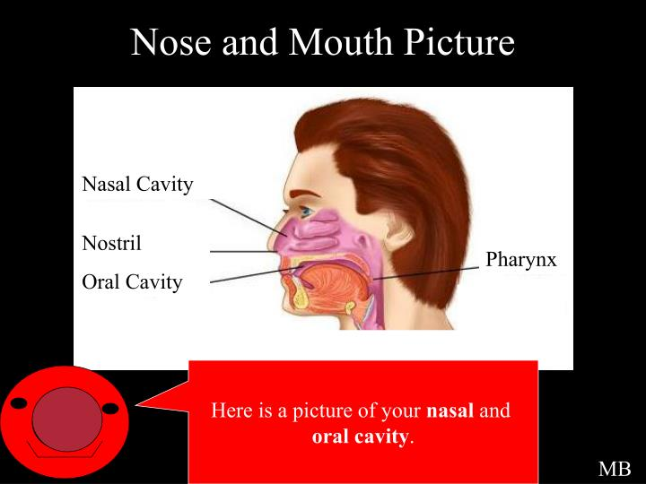 Nose and Mouth Picture
