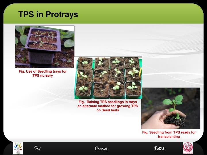 TPS in Protrays
