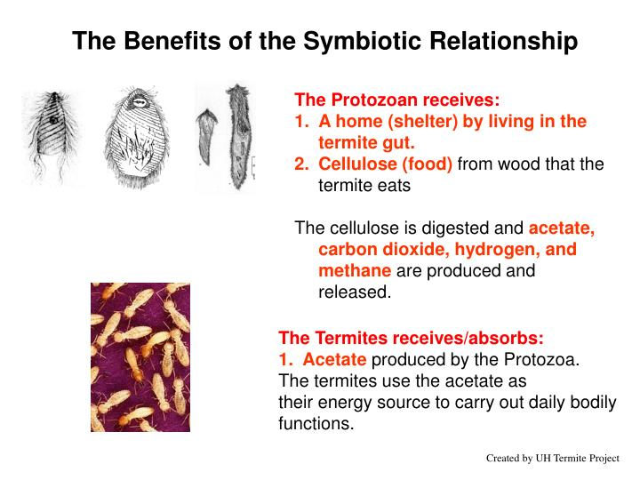 The Protozoan receives: