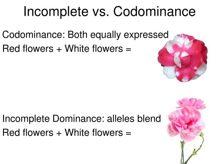 Incomplete Dominance Examples Codominance Www Imgkid Com