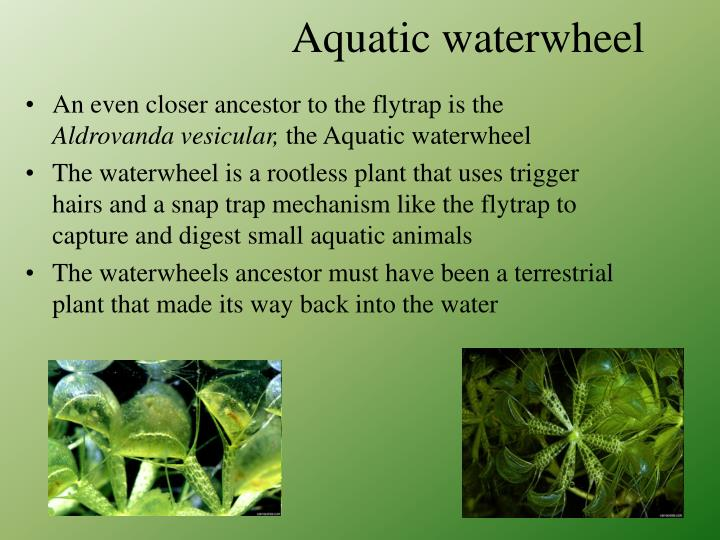 Aquatic waterwheel