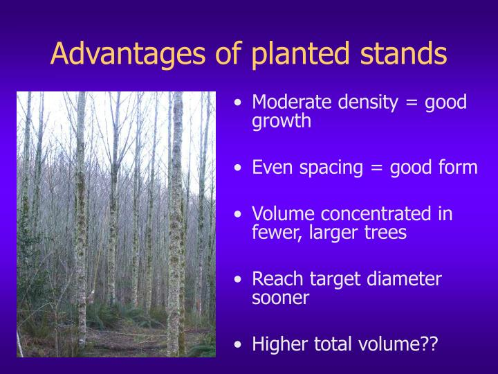 Advantages of planted stands
