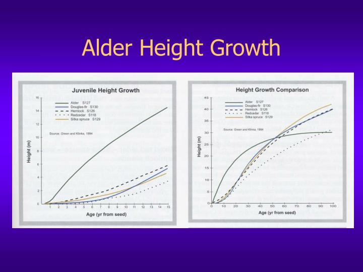 Alder height growth