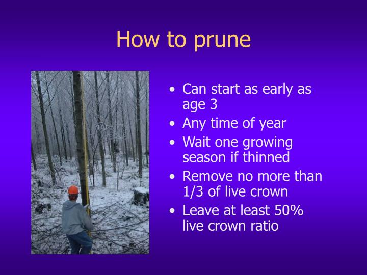 How to prune