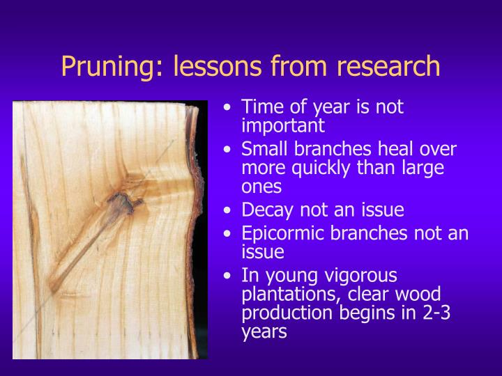 Pruning: lessons from research