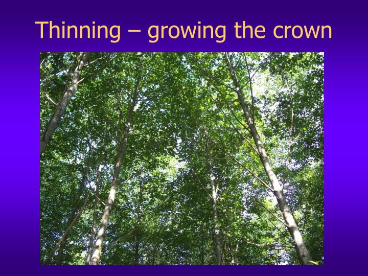 Thinning – growing the crown