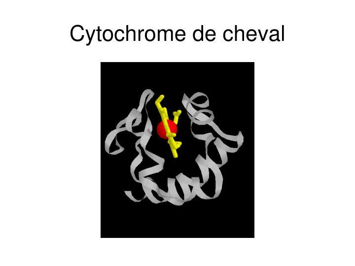 Cytochrome de cheval
