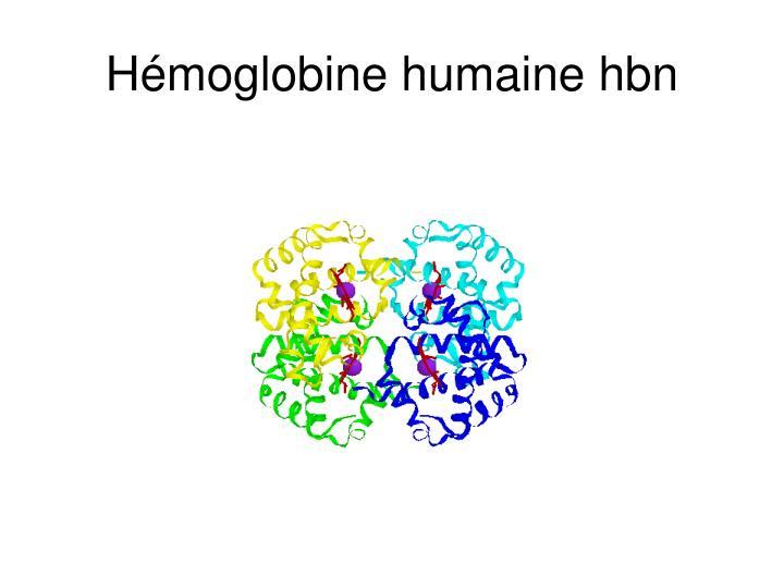 Hémoglobine humaine hbn