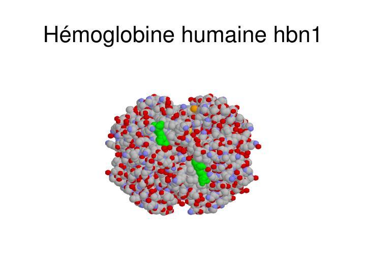 Hémoglobine humaine hbn1