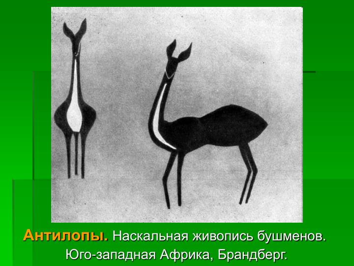 Антилопы.