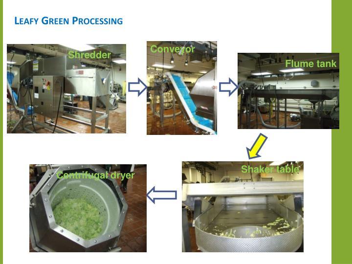 Leafy Green Processing