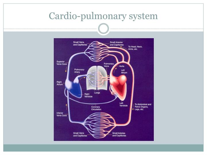Cardio-pulmonary system