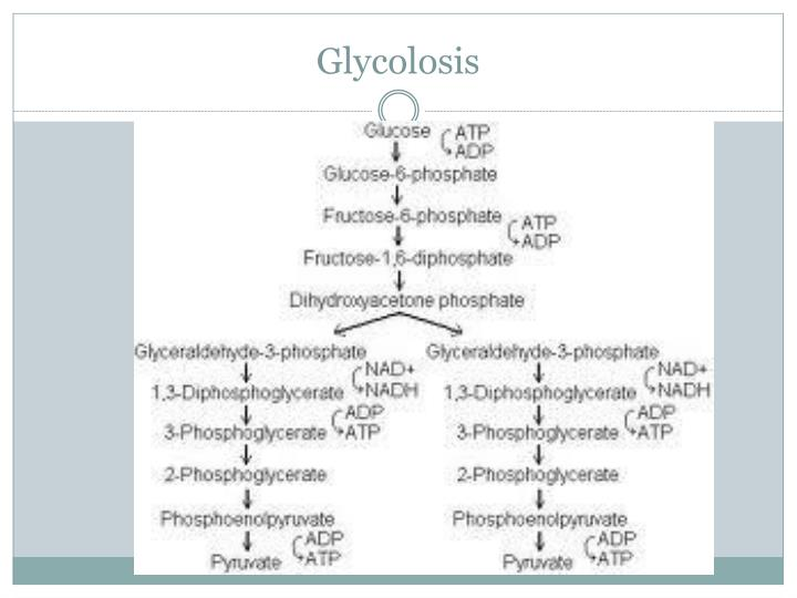Glycolosis