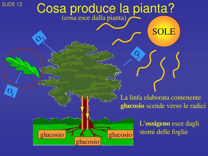 Cosa produce la pianta?