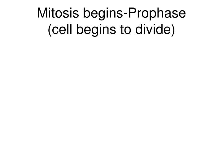 Mitosis begins-Prophase