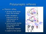 polysynaptic reflexes1