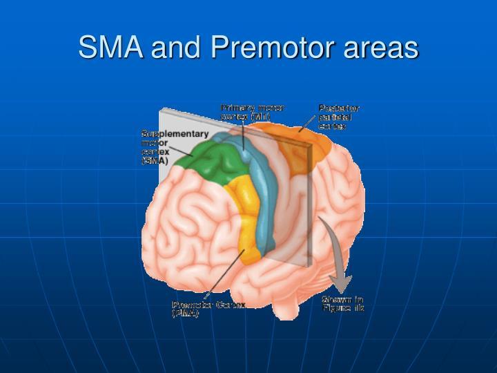 SMA and Premotor areas
