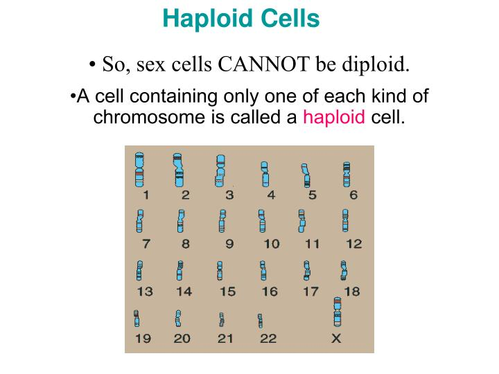 Haploid Cells
