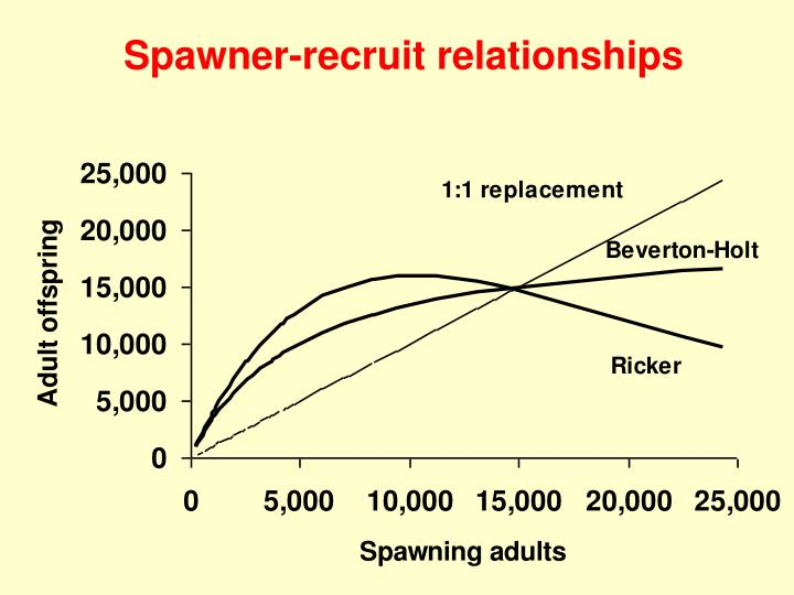 Spawner-recruit relationships