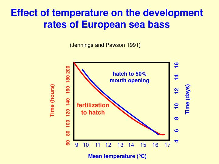Effect of temperature on the development rates of European sea bass