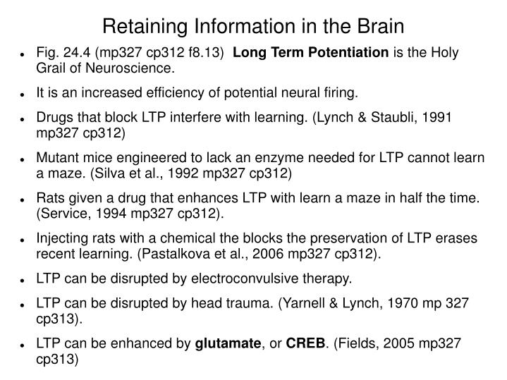 Retaining Information in the Brain