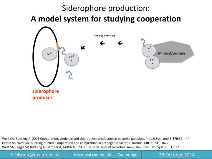 Siderophore production: