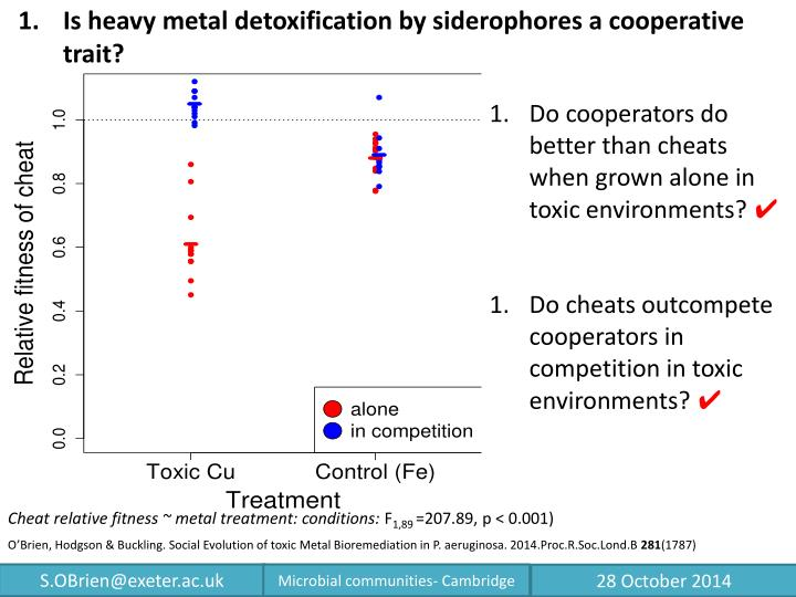Is heavy metal detoxification by siderophores a cooperative trait?
