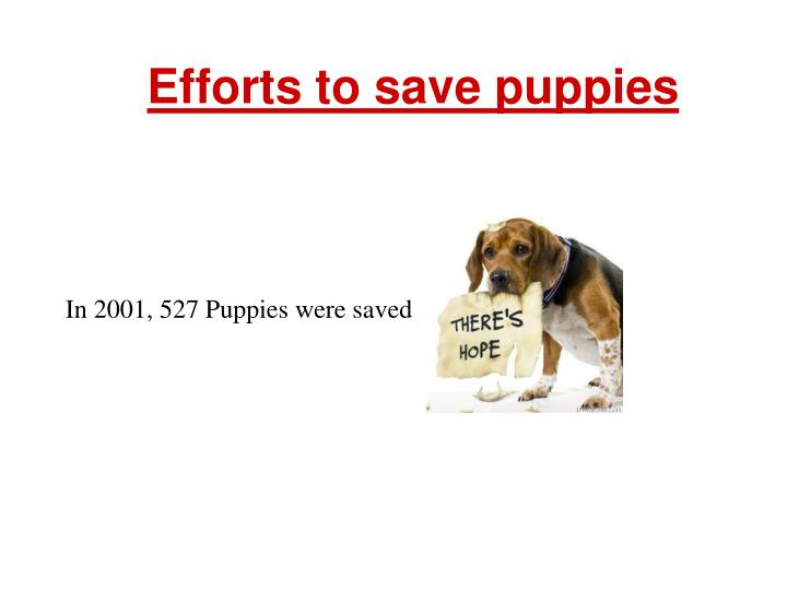 Efforts to save puppies