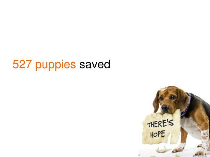 527 puppies