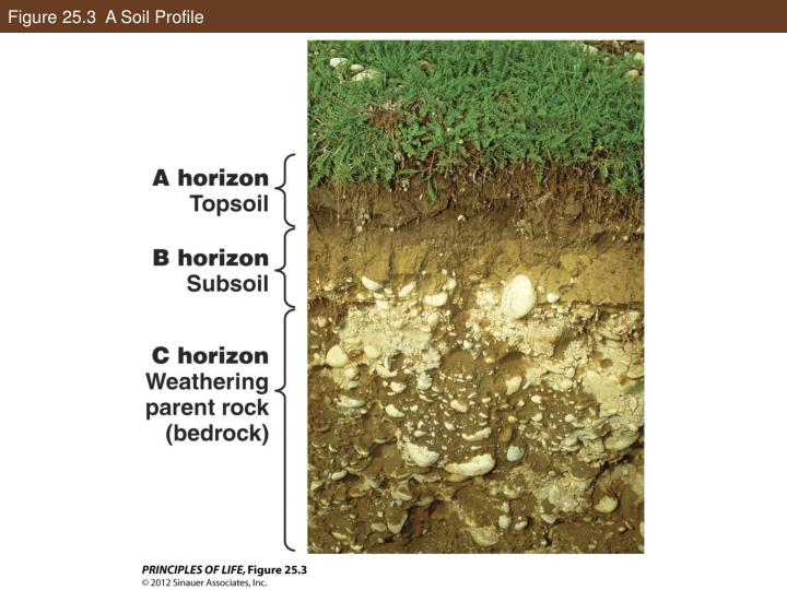 Figure 25.3  A Soil Profile
