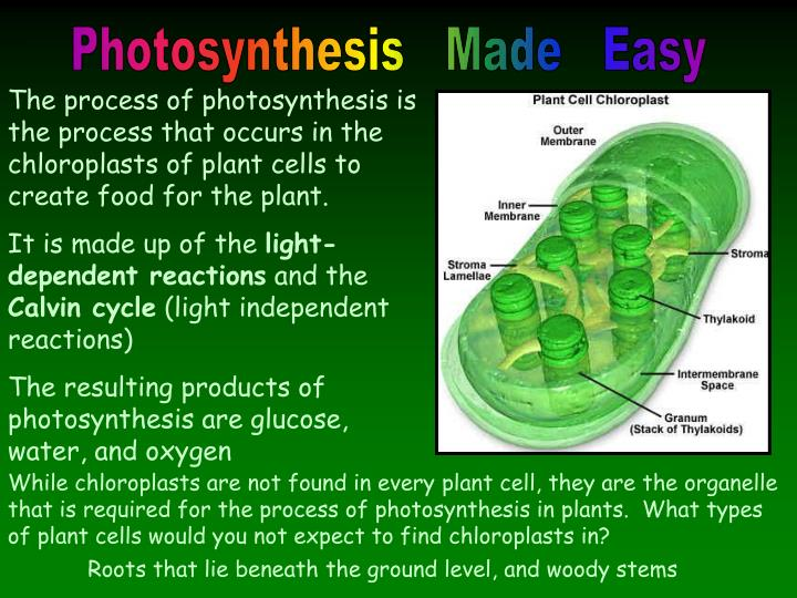 photosynthesis powerpoint presentation For this assignment, we were instructed to create a powerpoint presentation of at least 12 slides that adequately covered an academic subject of our choice al.