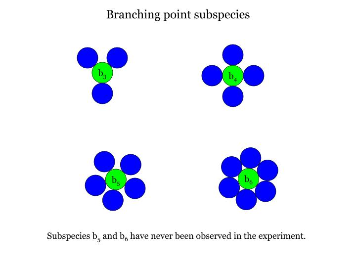 Branching point subspecies