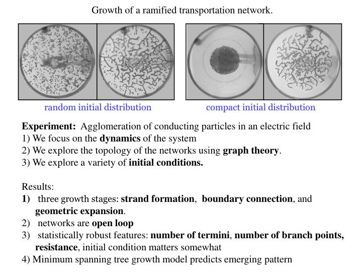 Growth of a ramified transportation network