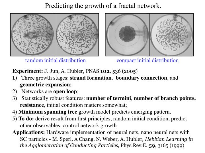 Predicting the growth of a fractal network.